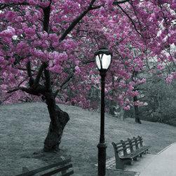 Central Park-Blossom -