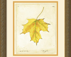 Amanti Art - Maple Leaf Framed Print by Meg Page - Meg Page's leaves are a nostalgic reminder of autumn leaves preserved in wax paper, the spirit of fall captured in each gloriously colored leaf.