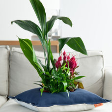 Modern Indoor Pots And Planters by pazit yahalomi