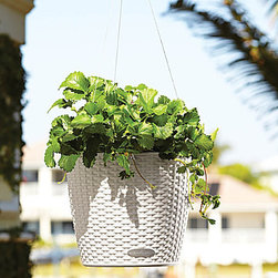"Improvements - Self-Watering Hanging Planter-Woven - The hanging basket's sub-irrigation system takes care of your plants for you for up to 12 weeks. The Self-Watering Hanging Planter has a lift-out liner for easy moving. Our Self-Watering Hanging Planter saves you time & aggravation.Tired of watering every day to keep your hanging plants from drying out? Now you won't have to! This beautiful wicker-look hanging basket has a built-in reservoir that holds 68 oz. of water, enough to keep your plants happy for many days. Just fill the removable plant liner with Plant Aeration Substrate (included), add soil or planting mix (not included), add your flowers, and hang. The Self-Watering Hanging Planter includes a 20"" stainless steel wire hanger that supports up to 100 lbs. There's even a water lever indicator to let you know when to refill the reservoir. Available in assorted colors, the fade-resistant resin wicker hanging basket is 11""Dia. x 9""H and has a flat bottom so it can also be placed on the ground or a table.The Self-Watering Hanging Planter includes Plant Aeration Substrate to create a drainage layer between the water reservoir and the soil layer in your planter. Composed of pumice, zeolites, and lava, Plant Aeration Substrate also includes slow-release fertilizer that is effective for 6-12 months. Reusable. Plant Aeration Substrate is also sold separately to be used with all your potted plants.Benefits of the Self-Watering Hanging Planter:"