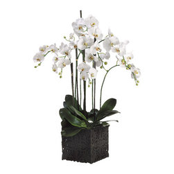 Silk Plants Direct - Silk Plants Direct Phalaenopsis Orchid Plant (Pack of 1) - Pack of 1. Silk Plants Direct specializes in manufacturing, design and supply of the most life-like, premium quality artificial plants, trees, flowers, arrangements, topiaries and containers for home, office and commercial use. Our Phalaenopsis Orchid Plant includes the following: