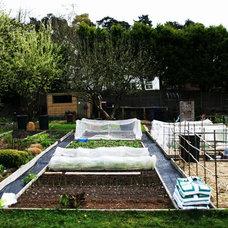 Traditional  by Laara Copley-Smith Garden & Landscape Design