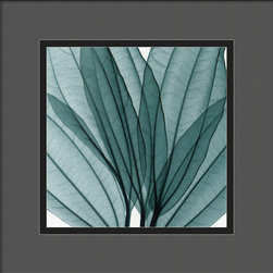 Amanti Art - Leaf Bouquet Framed Print by Steven N. Meyers - A leaf goes through its own photosynthesis, but when shown in the negative it's truly a photogenic beauty. This series of striking x-ray photos would complement any room that features potted house plants, and add a dimension of beauty to your wall.