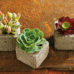VivaTerra - Succulent Cube Garden (set of 3) - VivaTerra - These succulent planters are a great, low maintenance way to add plants to smaller space. I love the idea of blooming concrete that's lightweight and manageable.