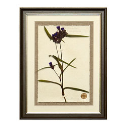 Botanicals Flowers A - Violet Wildflower - Framed - A stunning framed display of a flattened botanical specimen with many different options available to suit your mood or d�cor. Each specimen is one of a kind and no two will be alike. For those who desire uniqueness in their wall hangings, the Botanicals Collection can be placed in a room alone or with many clustered together for wonderful way to bring your love of nature indoors.