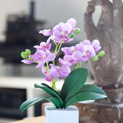 Silk Orchid Arrangement Lady - Small can be very powerful. This delicate pink mini silk phalaenopsis orchid add beauty and character to smaller spaces.