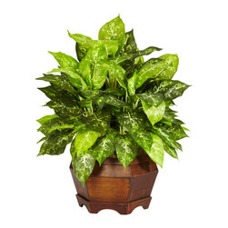 Nearly Natural - Variegated Dieffenbachia w/Large Hexagon Silk Plant - This symphony of beautiful flowers will be a popular addition to any flower enthusiast's collection.  From its numerous and cheerful blossoms to its lush collection of curved leaves to its decorative planter, this silk flower arrangement is as easy to look at as it is to take care of (no real need to water it - it practically tends itself).  Whatever the occasion or decor, this Large Dancing Lady is a graceful addition.
