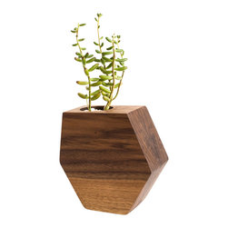 Few Bits - Asymmetrical Hexagon Succulent Planter, Walnut - A spin on the traditional hexagon shape, this planter is made from solid blocks of Walnut or Ash laminated together creating a beautiful design with the wood grain. It's then carefully shaped, sanded, and oiled to enhance the grain. Cork feet on the bottom protect your shelf or table top. Glass plant holder and rocks included, just add a small succulent and you're good to go. The planter also looks stunning with a large tillandsia.