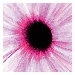 "Dr. Paula Fontaine/ Radiant Art Studios (RAS) - X-Ray Photograph of Daisy Acrylic Mounted  24"" x 24"", Pink - This x-ray photograph is taken by surgeon, Dr. Paula Fontaine, who uses medical x-ray technology and a digital hand-painting techniques to create stunning, vibrant, and unique designs.  The image is mounted under 1/4 inch acrylic and features a gallery-quality float mount hanging system."