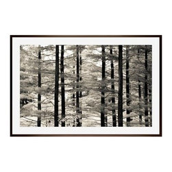 """Ana V Ramirez Framed Print, Into the Woods, Mat, 28 x 42"""", Espresso - Black and white offers the perfect medium for these tall trees, with dark trunks standing in stark relief against their many branches full of ephemeral leaves. Photographed at Valley Forge Park in Pennsylvania. 11"""" wide x 13"""" high 16"""" wide x 20"""" high 28"""" wide x 42"""" high Alder wood frame. Black or white painted finish; or espresso stained finish. Beveled white mat is archival quality and acid-free. Available with or without a mat. {{link path='shop/accessories-decor/pb-artist-gallery/artist-gallery-ana-ramirez/'}}Get to know Ana Ramirez.{{/link}}"""