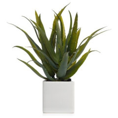 modern plants by Z Gallerie