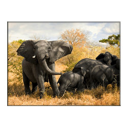 Vibrant Canvas Prints - Canvas Art Prints, Framed Huge Canvas Print 5 Panel Forest Autumn Leaves - This is a beautiful, 100% quality cotton canvas print. This print is perfect for any home or office, and will make any room shine with its addition of color and beauty.  - Modern Home and Office Interior Decor   Elephant Canvas Designs - 1 Panel Print   Elephant Mother Wildlife Print on Canvas - Wall Art - 30 Day Money Back Guarantee.