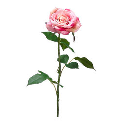 Silk Plants Direct - Silk Plants Direct Rose (Pack of 12) - Rose - Silk Plants Direct specializes in manufacturing, design and supply of the most life-like, premium quality artificial plants, trees, flowers, arrangements, topiaries and containers for home, office and commercial use. Our Rose includes the following: