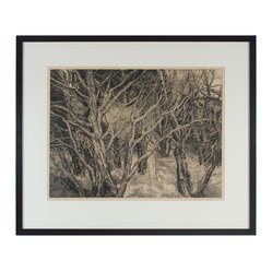 """1970s Streaming Cypress"" Etching by Patricia Tobacco Forrester"