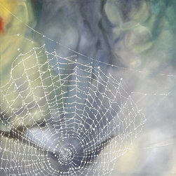 """Dew Drops On, Painting"" - ""Very soft-focus background in blue-lavender, yellow and green with full orb-weaver spider web covered in dew. """