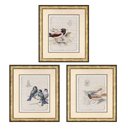 Paragon Art - Paragon Birds on Document II ,Set of 3 - Artwork - Birds on Document II ,Set of 3 ,  Paragon Exclusive Giclee     Artist is Burney , Paragon has some of the finest designers in the home accessory industry. From industry veterans with an intimate knowledge of design, to new talent with an eye for the cutting edge, Paragon is poised to elevate wall decor to a new level of style.
