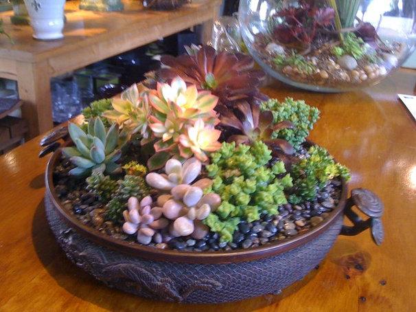 Asian Plants by GREEN DOOR DESIGN