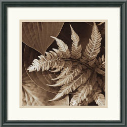 Amanti Art - Painted Ferns II Framed Print by Rebecca Swanson - Sophisticated, rich, modern; celebrate the form and grace of natural structure in this beautiful photographic study by artist Rebecca Swanson.
