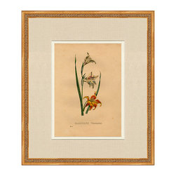 """Ballard Designs - Flor De Serres Original Framed Print #131 - Museum-quality linen mat & cream inner mat. UV-protective conservation glass. Hardwood frame with carved rope details. Hand applied antique gold finish. Each print in our Original Framed Art Series has a rich history that only an original can offer. With every imperfection that only comes from age, you can appreciate the unique character of a true 19th century antique.Part of our Original Framed Art Series, this authentic 19th century lithograph is an actual bookplate from Flor des Serres et des Jardins de l'Europe (""""Flowers of the Greenhouses and Gardens of Europe""""), a highly regarded horticultural journal founded by famed Belgian horticulturalist, Louis Van Houtte. The extraordinary colors and attention to detail are credited to the impressive craftsmanship of Belgian lithographers Severyns, Stroobant and De Pannemaker.Note: Expect to see the hallmarks of a true antique, including foxing, watermarks, creases and other rich character traits.Original Lithograph features: . . . ."""