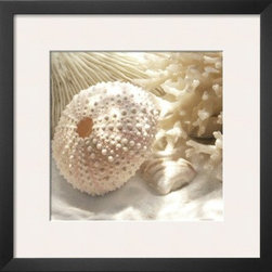Artcom - Coral Shell I by Donna Geissler - Coral Shell I by Donna Geissler is a Framed Art Print set with a SOHO Thin wood frame and a Polar White mat.