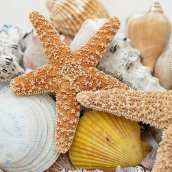 Wallmonkeys Wall Decals - Starfish and Seashells Wall Mural - 60 Inches W x 40 Inches H - Easy to apply - simply peel and stick!