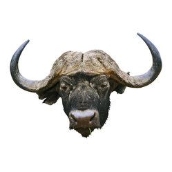 Water Buffalo Decal