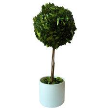 Modern Plants by Design Darling