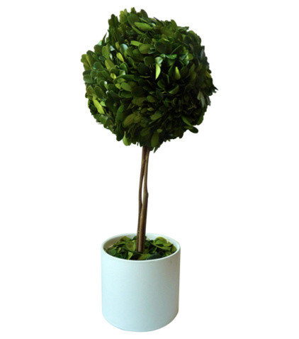 Modern Plants by Design Darling