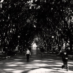 The Andy Moine Company LLC - Hyde Park Sydney Australia Fine Art Black and White Photography Limited Edition, - Black and White Fine Art Photography captured with 35MM Ilford Film and reproduced in Limited Editions on Canvas OR Brushed Aluminum. Shot for an Exhibition called 'Signs of Life' This is a beautiful composition of children playing innocently under the Moreton Bay Fig tree tunnel in Sydney's Hyde Park. Sadly, many of these fig trees were removed in 2006 due to a fungal disease. It only makes this moment even more special as a snapshot of time & place, immersed against a backdrop of urban planning that can be cherished forever.