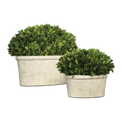 Uttermost - Uttermost Oval Domes Preserved Boxwood Set of 2 60107 - Preserved while�freshly�picked, natural evergreen foliage looks and feels like living boxwood potted in mossy, �stone�finishedterracotta planters.