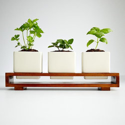 Culinary Herb Growing Kit - Exercise your green thumb with these perfectly sized pots for growing herbs on a window ledge.