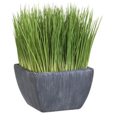 Modern Plants by Crate&Barrel