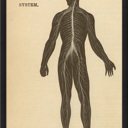 The Artwork Factory - LF Physiology Nervous System Print - This vintage wood-framed print celebrates human anatomy in a scientific yet stylish way. Ready to hang and printed with 12-color pigment ink on high resolution, acid-free, fade-resistant paper, this piece comes protected behind a sheet of glass for lasting quality.