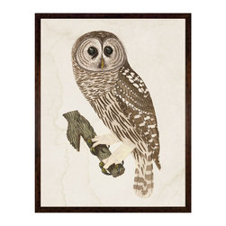 Kathy Kuo Home - Banzanini 18th Century Rustic Grand Barred Owl Engraving - Framed - Celebrate wisdom in a stately way with this handsome barred owl on your wall. This elegantly engraved nature drawing will bring a feeling of classicism to your decor, and the sense that you might just take flight. This nocturnal creature print is available framed or unframed.