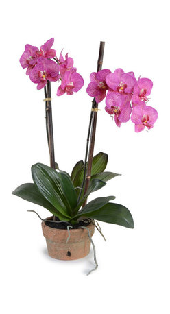 "New Growth Designs - Double Phalaenopsis 'Moth' Orchid Arrangement - This faithful replica of a phalaenopsis ""moth' orchid will be an enduring and charming companion for your desk, console or side table.  Delicate yet durable, it will show its true colors, without fading, for many years to come."