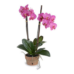"""New Growth Designs - Double Phalaenopsis 'Moth' Orchid Arrangement - This faithful replica of a phalaenopsis """"moth' orchid will be an enduring and charming companion for your desk, console or side table.  Delicate yet durable, it will show its true colors, without fading, for many years to come."""