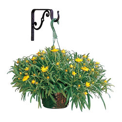 "Renovators Supply - Plant Hangers Black Wrought Iron Decorative Plant Hanger - This wall mount plant hanger measures 7 3/4"" high and has a projection of 9 1/8""."