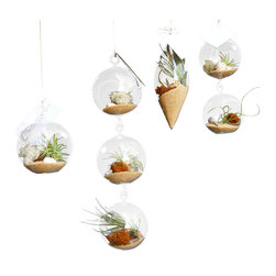 Air Plant Company - Varity Airplant Terrarium Pack - What's Included: