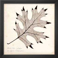 Black Oak Leaf Giclée Print by Booker Morey