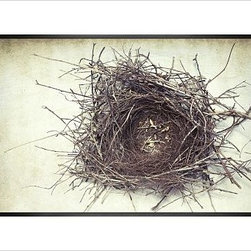"Lupen Grainne Framed Print, Nest, No Mat, 28 x 42"", Black - This is an image of an abandoned nest the photographer found in an enormous passionflower vine. The photo is at once charming and haunting, conjuring up thoughts of flight and home. 13"" wide x 11"" high 20"" wide x 16"" high 42"" wide x 28"" high Alder wood frame. Black or white painted finish; or espresso stained finish. Beveled white mat is archival quality and acid-free. Available with or without a mat. {{link path='/shop/accessories-decor/pb-artist-gallery/artist-gallery-lupen-grainne/'}}Get to know Lupen Grainne.{{/link}}"