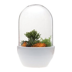 Areaware - Chive Pill - The Chive Pill is the quintessential large-size, fully contained terrarium container. With a ceramic base that is 5 inches high, the Pill allows you to build the perfect terrarium with a drainage layer of rocks, topped with charcoal and soil so you can plant 4-5 inch succulents. The glass dome rest between a lip on the rim of the base so you don't have to worry about it sliding off. The height of the dome means you can plant tall ferns and other such plants. And then everything else is left to your creative imagination. Toss in living or preserved moss, air plants, bark, rocks, quartz, little Lego dudes, then pop on the lid and let nature takes its course.