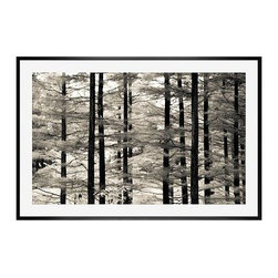 """Ana V Ramirez Framed Print, Into the Woods, Mat, 28 x 42"""", Black - Black and white offers the perfect medium for these tall trees, with dark trunks standing in stark relief against their many branches full of ephemeral leaves. Photographed at Valley Forge Park in Pennsylvania. 11"""" wide x 13"""" high 16"""" wide x 20"""" high 28"""" wide x 42"""" high Alder wood frame. Black or white painted finish; or espresso stained finish. Beveled white mat is archival quality and acid-free. Available with or without a mat. {{link path='shop/accessories-decor/pb-artist-gallery/artist-gallery-ana-ramirez/'}}Get to know Ana Ramirez.{{/link}}"""