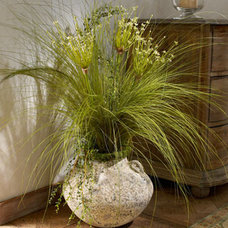 Traditional Plants by Horchow