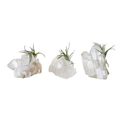 EarthSeaWarrior - Quartz Crystal Gemstone with Live Air Plant - Designed for and Available Exclusively for Houzz!