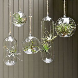 Shane Powers Hanging Glass Bubble Collection - Hanging gardens bring life to a room (every room should have something living in it) and are fantastic conversation starters in the modern abode. Hang these beautiful fern gardens with traditional colorful glass ornaments in an entryway or in front of a window.