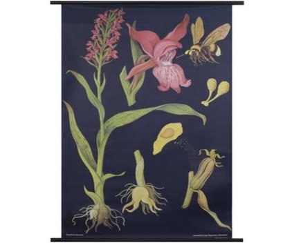 Traditional Artwork Orchid Botanical Poster