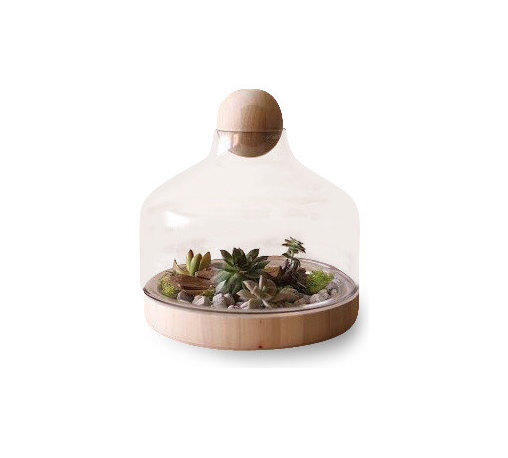 "Silver Nest - Glass Terrarium with Wood Top - Small - 12.5""h - Adorable glass terrarium to store keepsakes or start an indoor garden.  Sits 12.5"" high and both the wooden ball and the glass top separate to come off the base."
