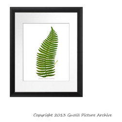 Antique Fern Botanical Print No.3 Green Leaf Fern Art - Click this link to visit GnosisPictureArchive shop: