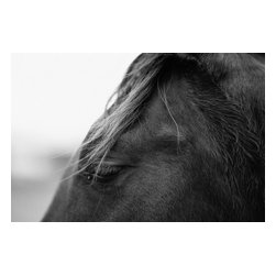Custom Photo Factory - Close-Up Horse Profile Canvas Wall Art - Close-Up Horse Profile  Size: 20 Inches x 30 Inches . Ready to Hang on 1.5 Inch Thick Wooden Frame. 30 Day Money Back Guarantee. Made in America-Los Angeles, CA. High Quality, Archival Museum Grade Canvas. Will last 150 Plus Years Without Fading. High quality canvas art print using archival inks and museum grade canvas. Archival quality canvas print will last over 150 years without fading. Canvas reproduction comes in different sizes. Gallery-wrapped style: the entire print is wrapped around 1.5 inch thick wooden frame. We use the highest quality pine wood available. By purchasing this canvas art photo, you agree it's for personal use only and it's not for republication, re-transmission, reproduction or other use.