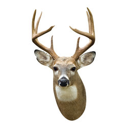 Walls Need Love - White Tail Deer, Adhesive Wall Decal - All the majesty of a forest stag, none of the explanation why Bambi's father is on display. Place this beautifully rendered decal in the den or office for an instant dose of hunting chic. With giant white antlers and attentive ears, the deer practically jumps off the wall, but don't worry — his only job is to make your room look great.